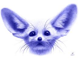 OY圆珠笔画:耳廓狐