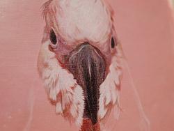手绘彩铅鹦鹉