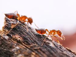 微距(蚂蚁虫虫)