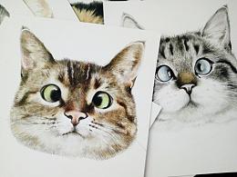 撸猫新境界,彩铅猫咪对眼儿九联儿
