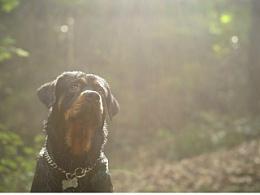 阿赫 【稻糕】 宠物摄影 宠物写真 杭州 挪威纳