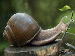 《snail》写实插图分享过程