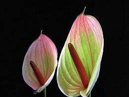 手机花卉摄影作品
