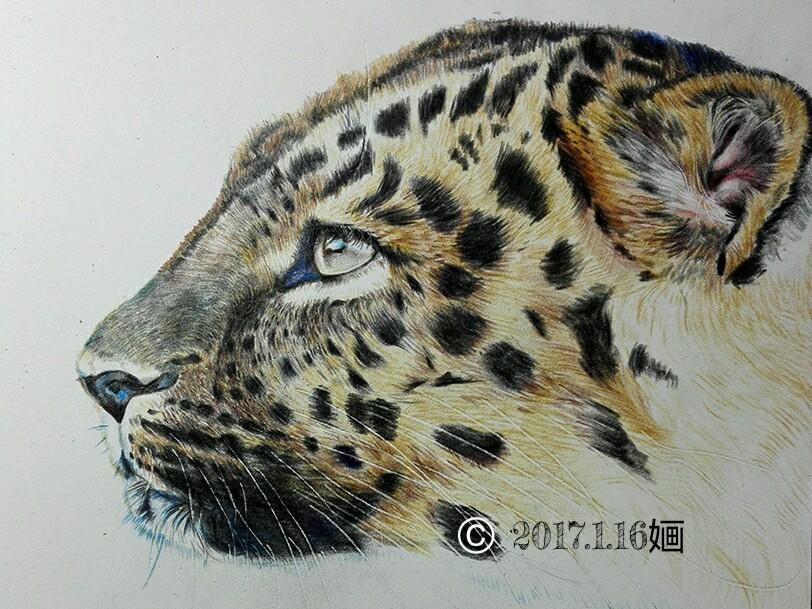 彩铅猎豹图片