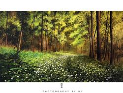 小花的水彩~奇迹之森~