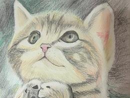 彩铅猫,临摹作品