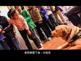 导盲犬法官系列New 6 【稻糕】 宠物摄影 宠物写真 杭州 纪实 拉布拉多