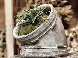 苔藓与水泥花器更配哦!