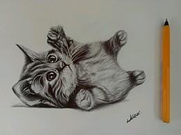 圆珠笔画——小猫