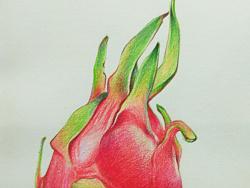 给宝宝画的水果系列之火龙果图片