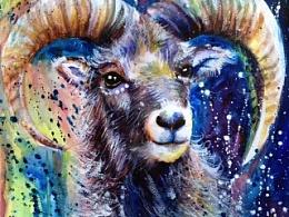 泼洒系列——《盘羊》