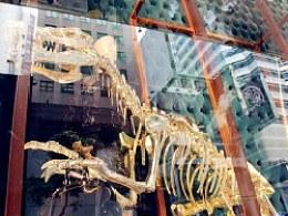 LV X 恐龙化石(2013年秋冬)