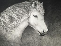 【手绘】硬笔素描《白驹》