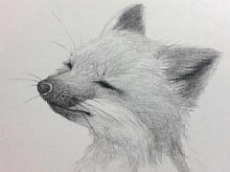 《小果的本 森de精灵——陶醉的狐狸(过程)