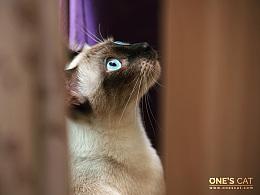 Onescat-克查原创作品【9】美少年汤包