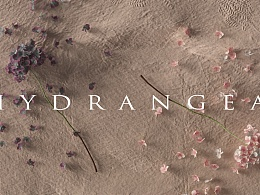 Hydrangea绣球花语