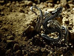 骸首饰设计师原创【缠绕之蛇】全镂骨架空手工戒指