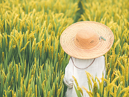 我和我的家乡—守望稻田