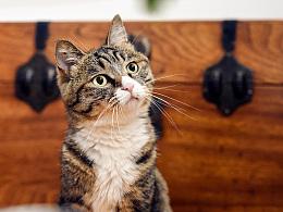 Onescat-克查原创作品【2】流浪猫乔巴