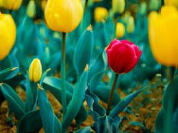 《尚湖边的花儿》_想·享摄影