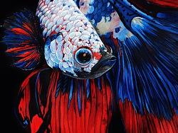 彩铅——暹罗斗鱼
