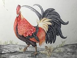 鸡年教你怎么画鸡