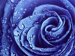 【圆珠笔画】——蓝色妖姬