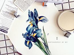 小花的水彩~双煞幽蓝~