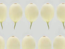 新蒜和郁金香瓜