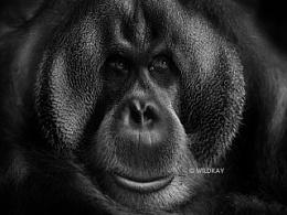纯影调动物黑白摄影