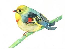 鸟类水彩小画