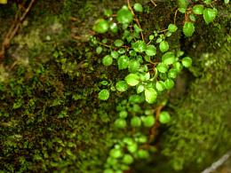 汉拿山的自然的生命之美