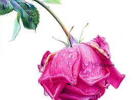 彩铅手绘《闭月羞花》