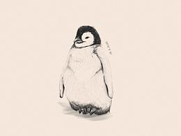 每日一画之胖企鹅