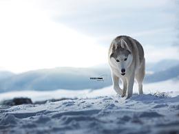 Dante宠物摄影雪景