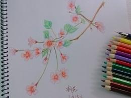 彩铅练习,手绘