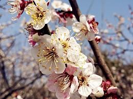 初春~<br>寻梅~