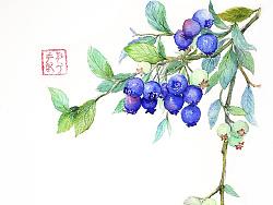 几幅水彩植物系列