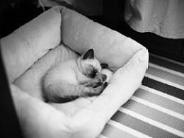晚安,喵我先睡了