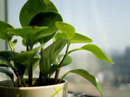 一盆绿植,暖洋洋的。