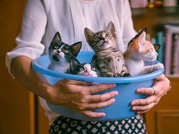 朋友家收养的奶猫们毕业啦