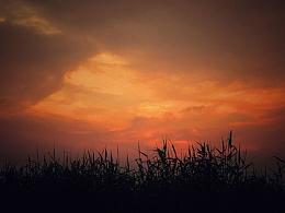 夕阳下的芦苇