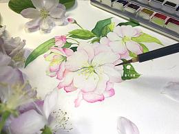 【从零学会画水彩】《西府海棠》花卉篇vol.15 『蒲之未落 0基础水彩教学』