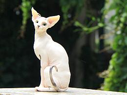 史芬克斯猫--涂装达成