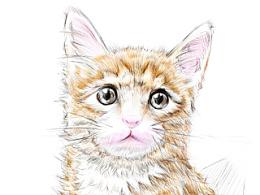 小猫~小明~
