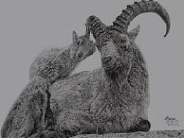 Patro-趙奇偉点绘钢笔画《北山羊物语》教程详解