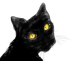 一只黑色的cat