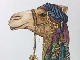 阿拉伯风情骆驼嘻嘻~