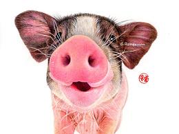 ㊗大家【猪年吉祥】
