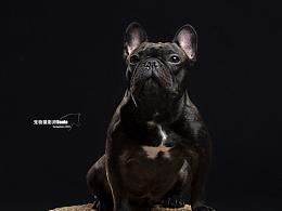 宠物摄影师Dante法牛